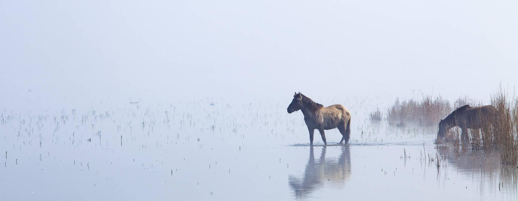 Nijs Gemeente Noardeast-Fryslan - Hynders yn mist