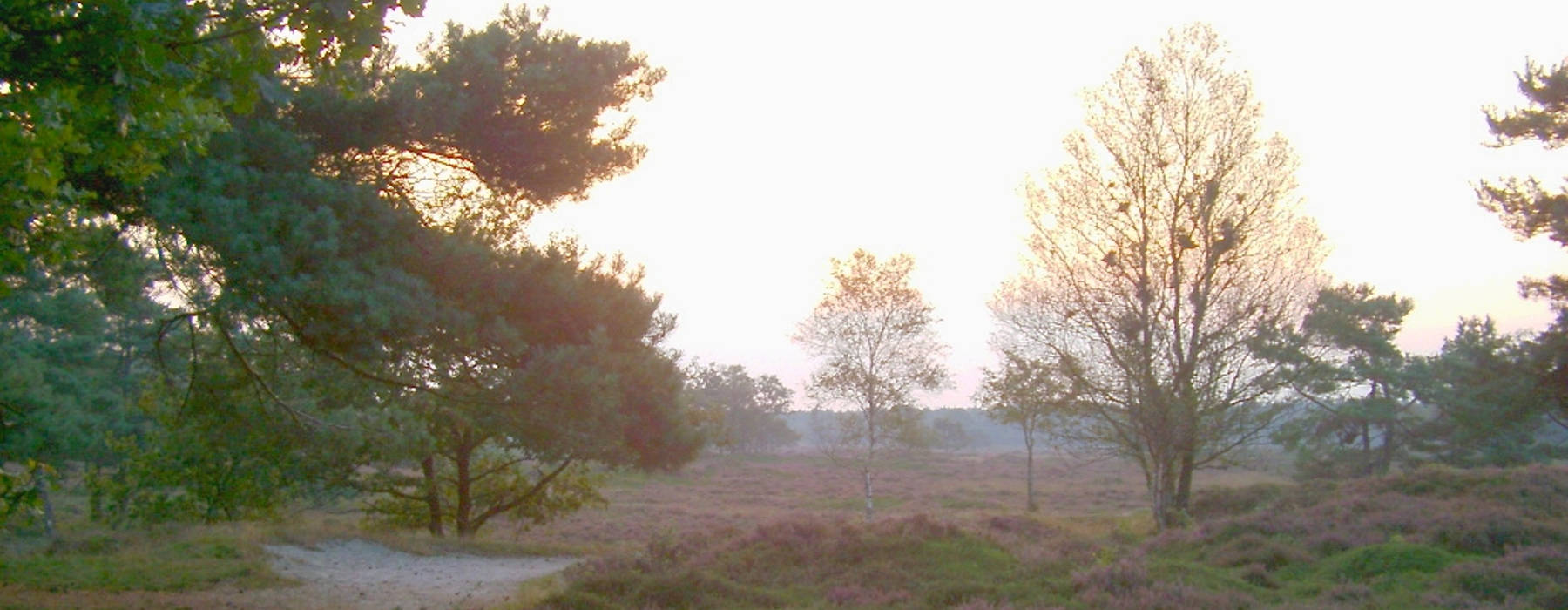 Nijs Gemeente Opsterlan - Heide